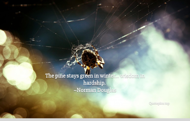 The pine stays green in winter... wisdom in hardship. ~Norman Douglas