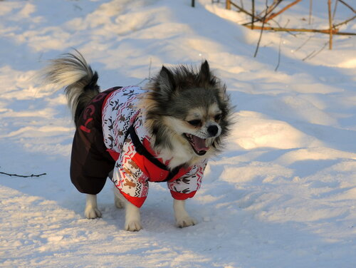 """ПОБЕДИТЕЛИ конкурса   """"Собака в зимнем пейзаже"""""""