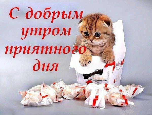 Открытки с добрым утром котята с