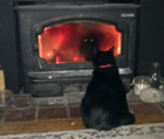 © jaker2343/reddit.com  Иногда ясмотрю, как мой кот сидит сайпадом всвоей юрте, идумаю, не