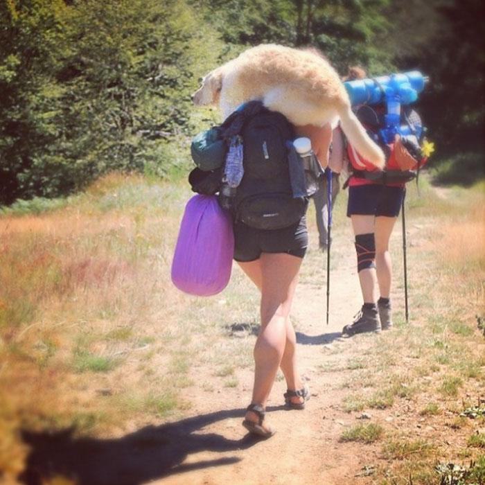 Псу, если верить его хозяйке, тоже все нравится: «Оди обожает путешествовать. Он балуется везде, куд