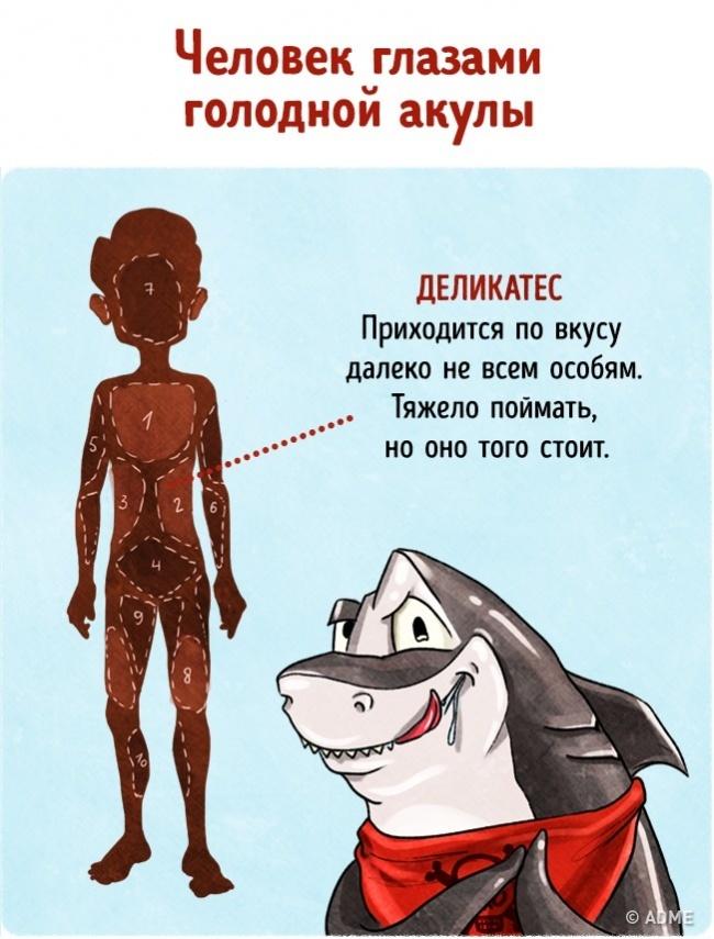 9иллюстраций отом, как мывыглядим вглазах животных