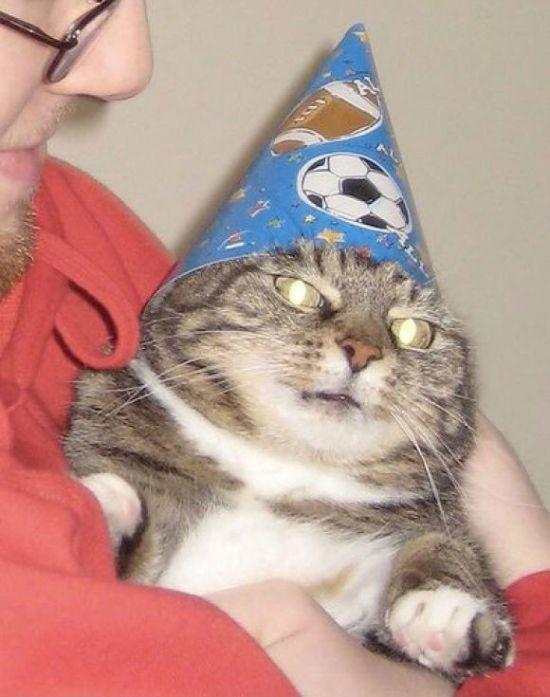 Кот-волшебник стал мемом Вжух