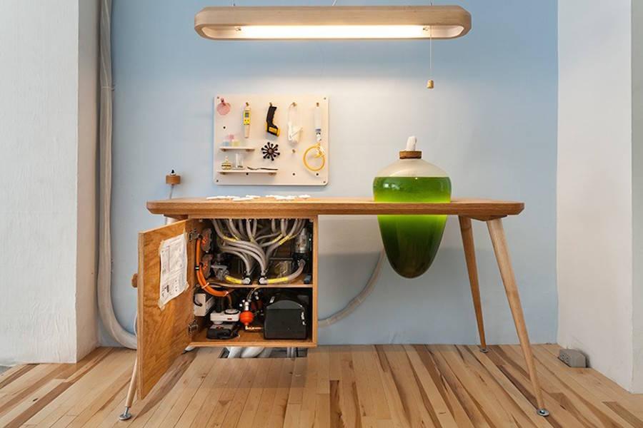 Micro Algae to Power Home