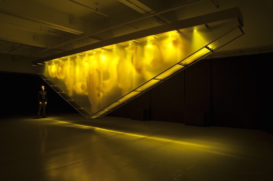 Golden Installations by David Spriggs