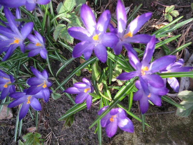 Первоцветы райскрго садика