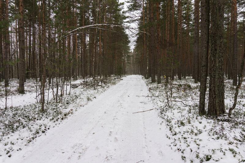 дорога на полуострове киперорт зимой