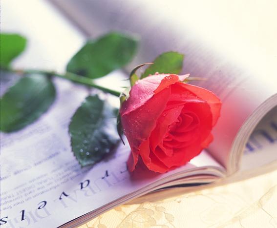 С днем поэзии! Роза на книге