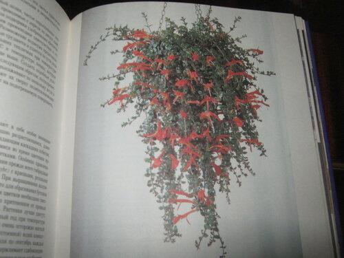Записная книжка Натальи - Страница 5 0_1c2aa2_f34250ca_L