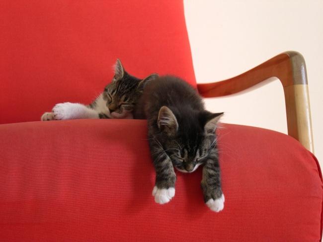 © flickr  Распорядок дня насегодня: поспать, еще поспать, апосле уже испать можно.