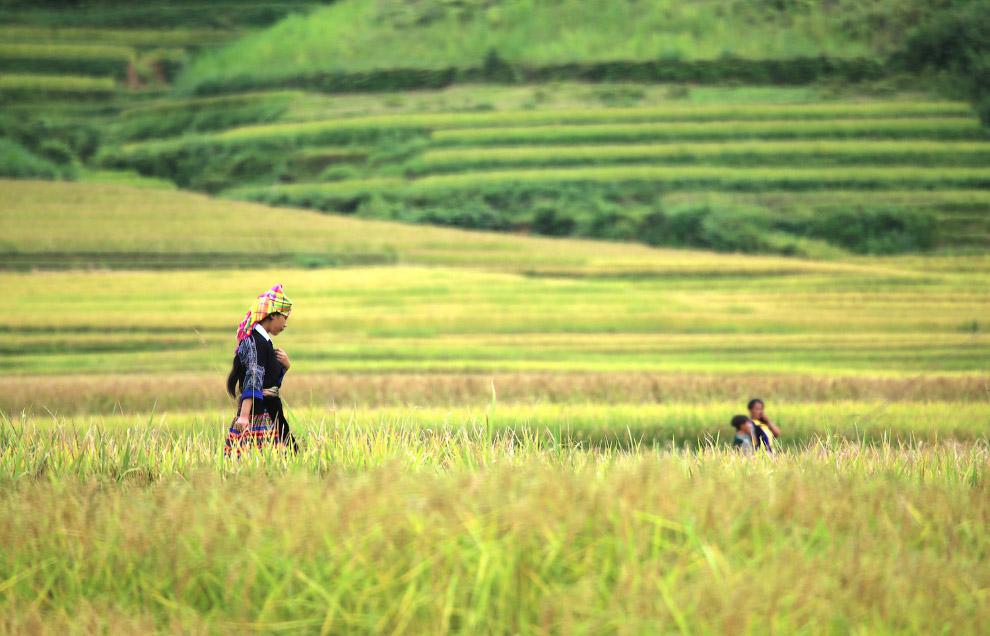 10. Вьетнам, 1 октября 2013. (Фото Hoang Dinh Nam):