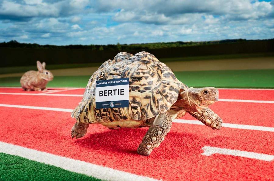 1. Берти — самая быстрая черепаха в мире, разогнавшаяся до скорости 28 сантиметров в секунду.