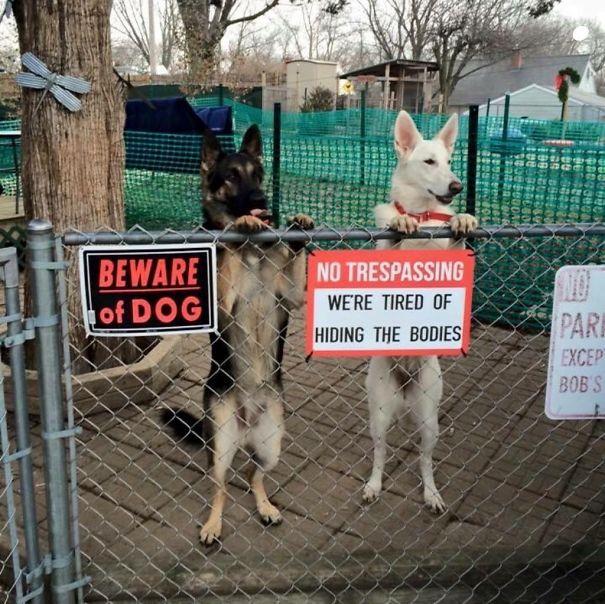 «Осторожно, собака. Мы уже устали прятать тела».