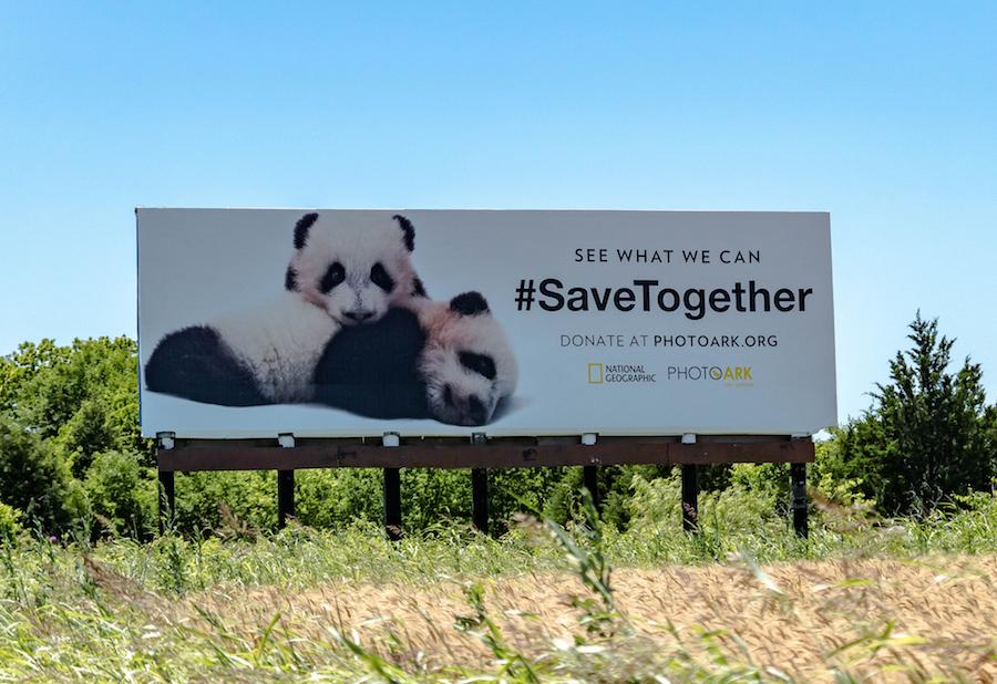 Кампания National Geographic, призывающая бороться за сохранение исчезающих видов животных