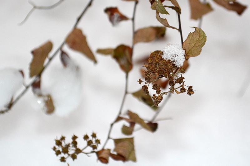 цветы в снегу 20.jpg