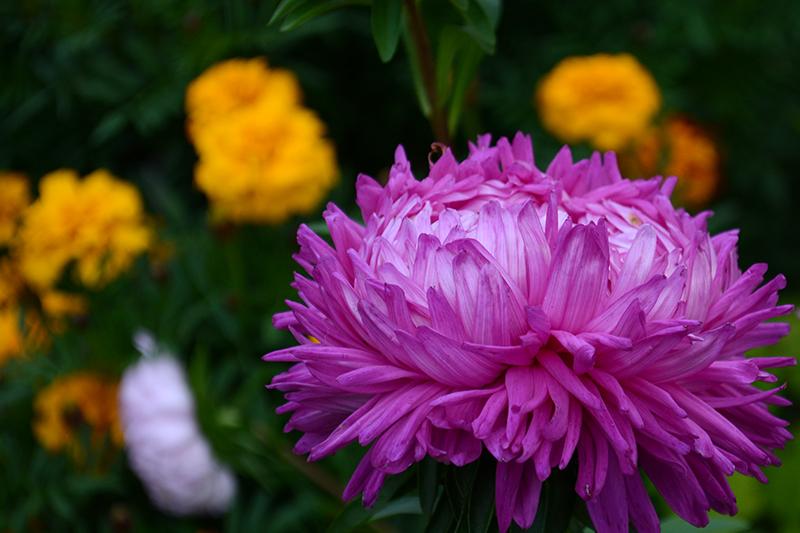 цветы дождь 20.jpg