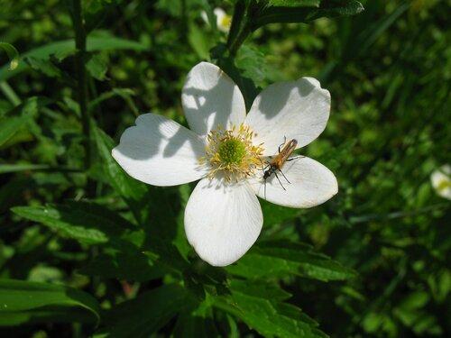 Цветок с жучком