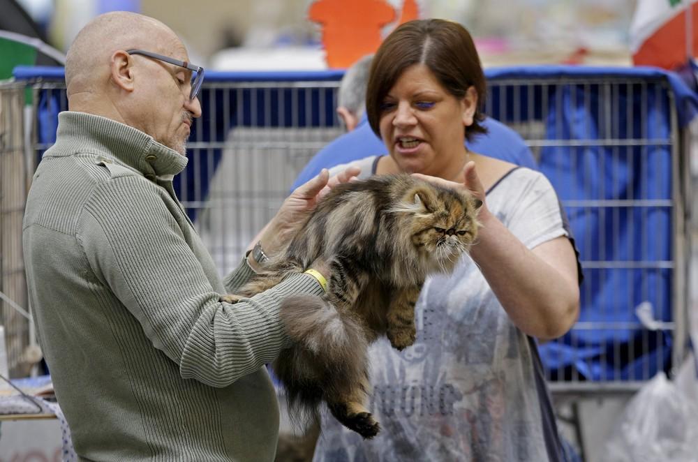 Выставка кошек в Риме