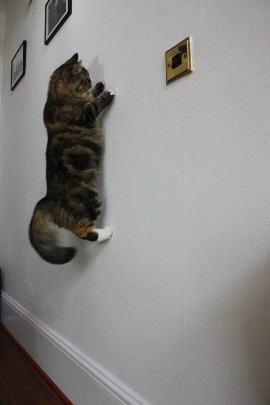 живность-кот-кот-паук-2996304.jpeg