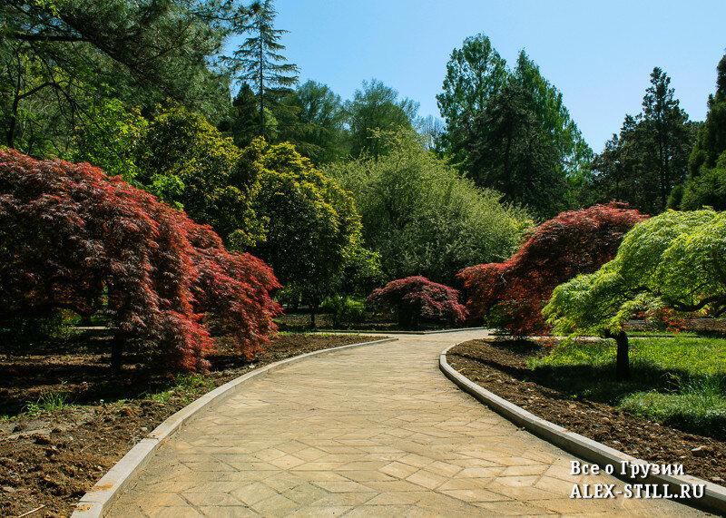Дорожка в Ботаническом саду Батуми