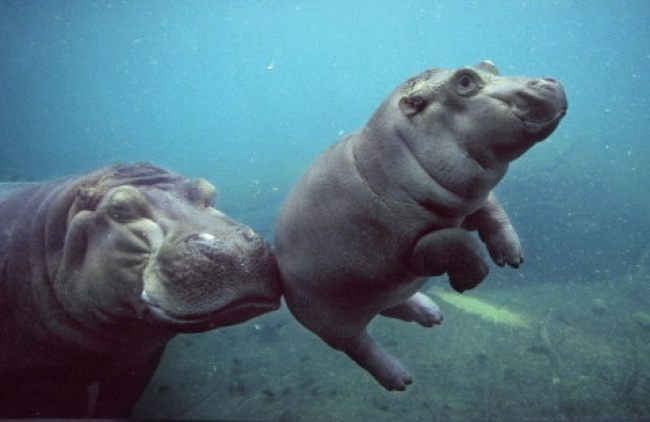 © pinterest  Фото на превью AMANDA KOPP / National Geographic