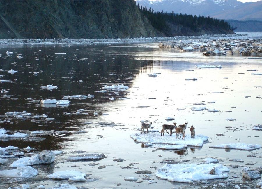 25. Таяние льда на реке Юкон в штате Аляска, США.