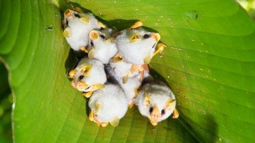 Самые редкие и удивительные представители животного мира на нашей планете