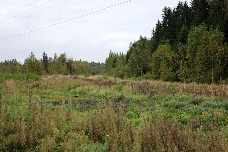 Линия на Жарковский от Земцов теряется в траве