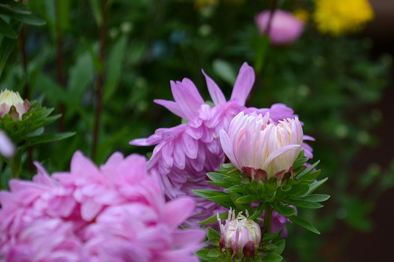 цветы дождливый день.jpg