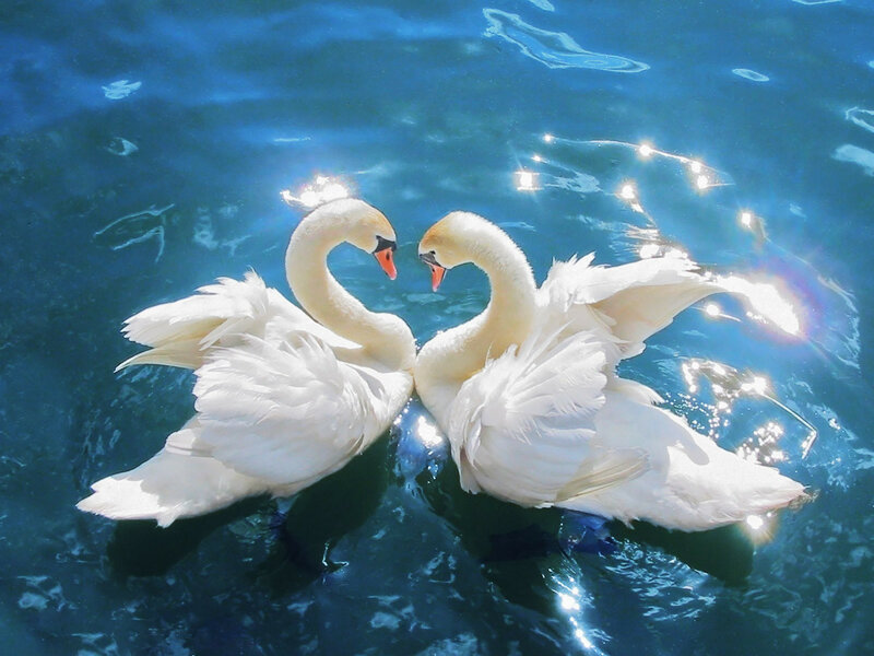 romantic poets shows fascination in nature and animals
