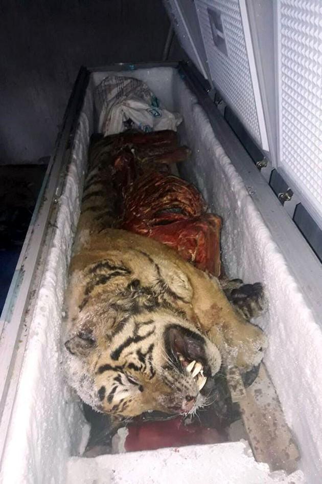 Пять замороженных тигров нашли во Вьетнаме