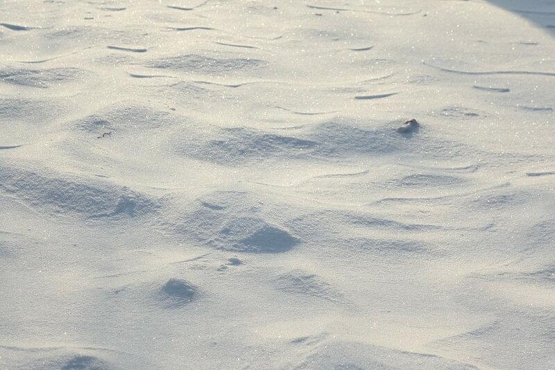 пустыня снежная.jpg