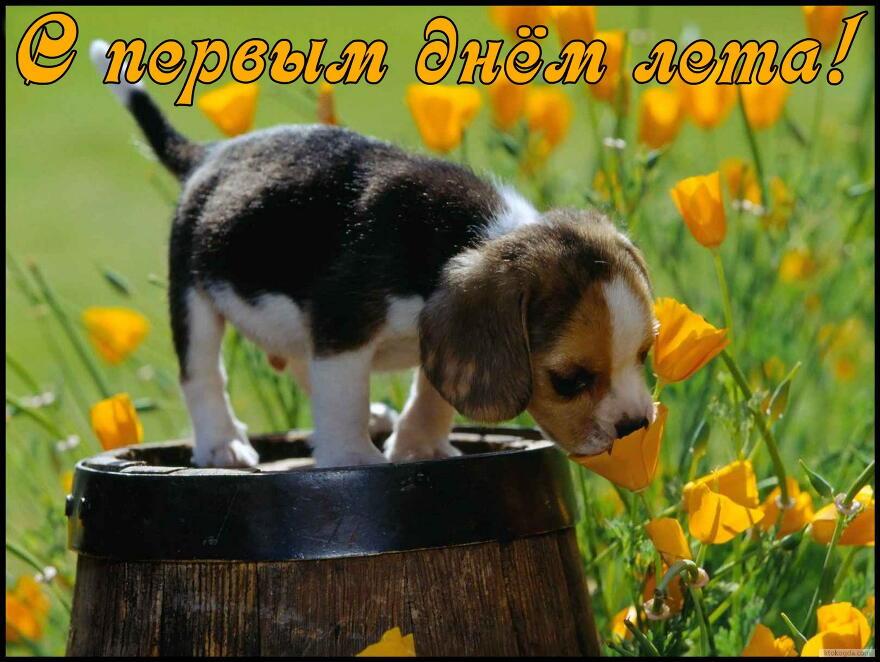 Открытка с первым днем лета, щенок и цветы открытки фото рисунки картинки поздравления