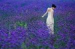 99px_ru_photo_145646_devushka_v_belom_plate_na_lavandovom_pole.jpg