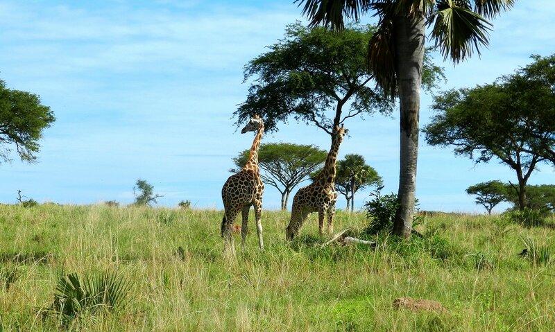 Дикая природа Уганды