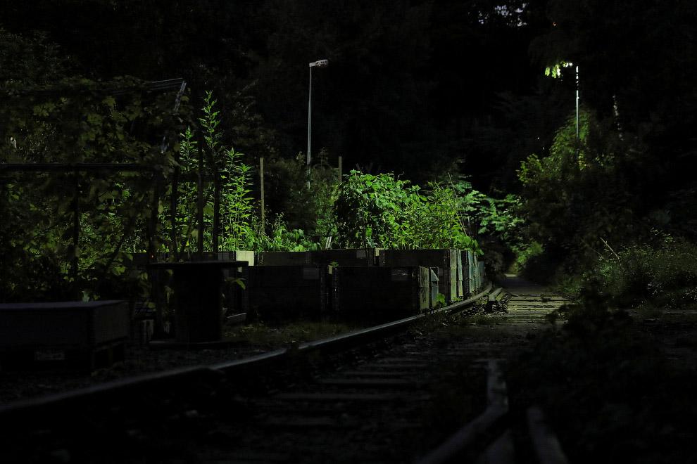 5. Ах, какая капуста выросла в ботаническом саду Augustenberg на крыше в городе Мальмё! Швеция,