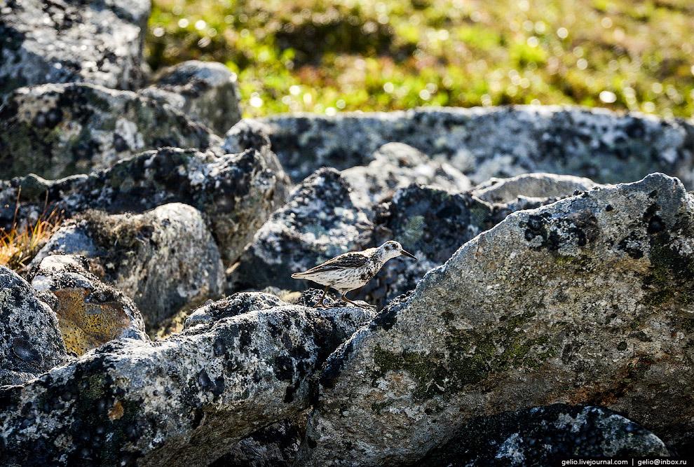 29. Судя по этому простейшему сооружению из камней (тур), туристы здесь всё-таки бывают.