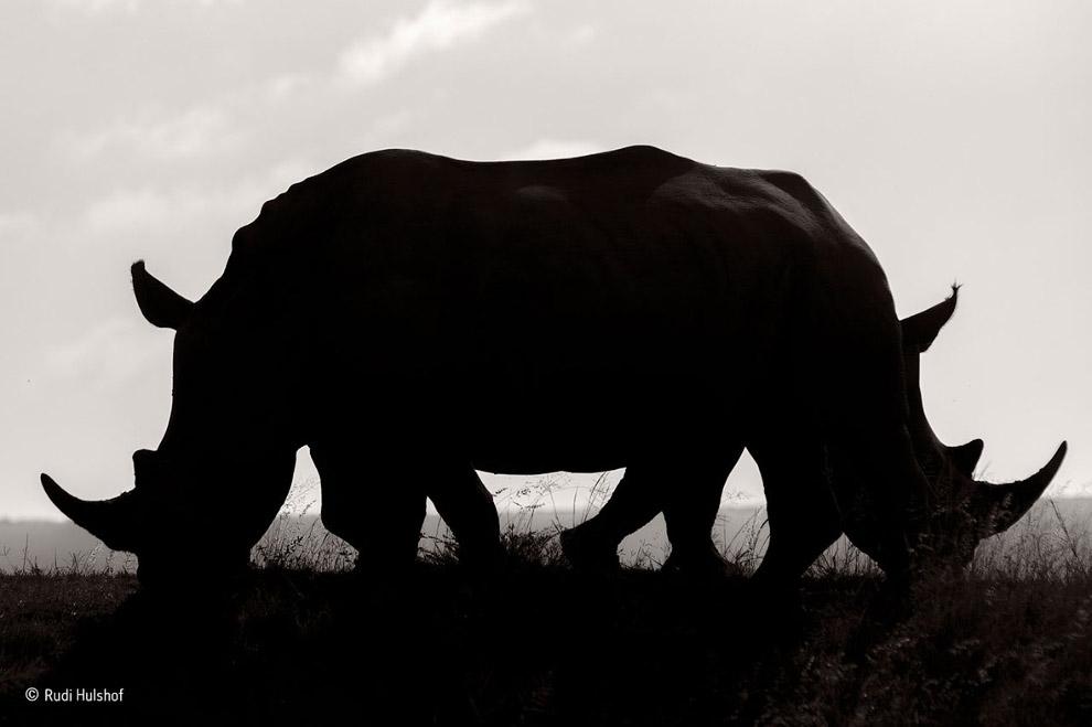 7. Хищники. Парк Кгалагади, Южная Африк. (Фото Bernd Wasiolka | Wildlife Photographer of the Ye