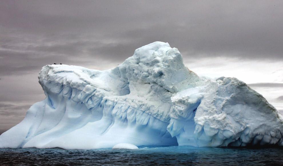 8. Пингвин Адели на дрейфующих льдах в море Росса в Антарктиде, 28 октября 2016. Назван француз