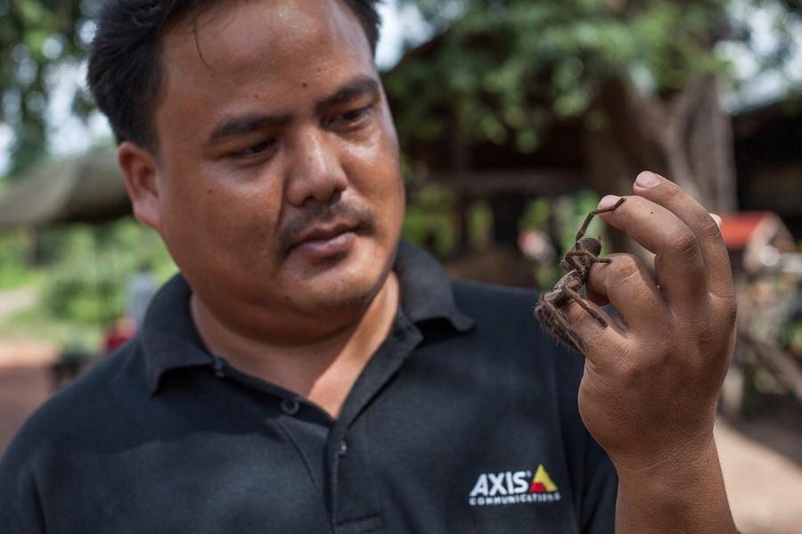 6. Приобрести тарантулов можно на рынке Скуон, примерно в 75 километрах от столицы Пномпень по дорог