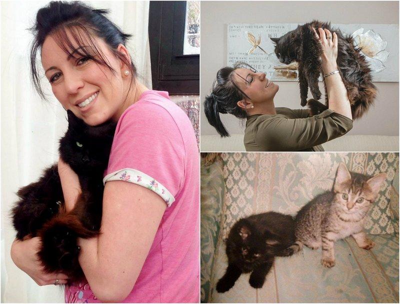 К британке вернулся одноглазый кот пропавший 11 лет назад (6 фото)