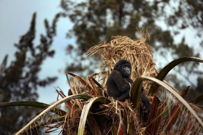 Жизнь в Конго