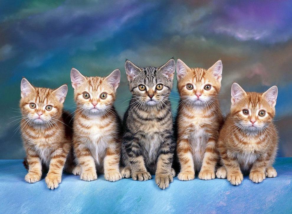 Бог создал Кошку, чтобы у человека был тигр, которого можно погладить. Виктор Гюго