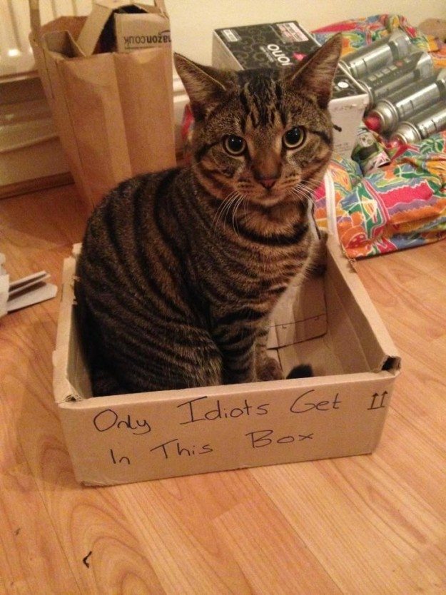 Коробки всегда отлично срабатывают в качестве ловушек для котов. Что бы там ни было.