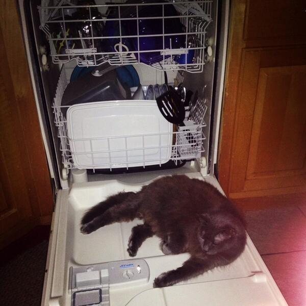 Нет лучше места для кота.
