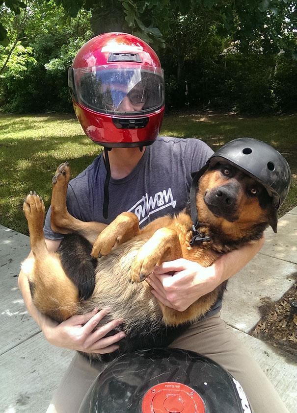 «Сестра попросила привезти ее собаку из Далласа в Остин, так что я отправил ей эту фотографию и сказ