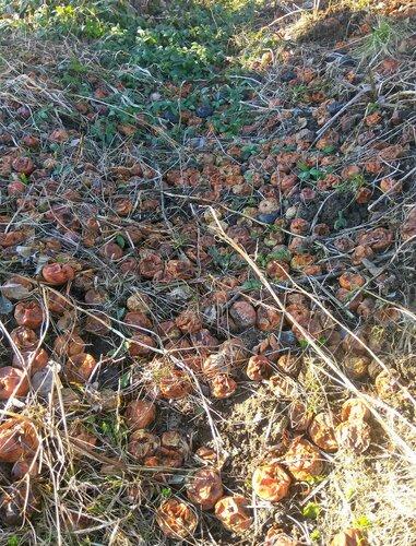 Яблочное удобрение.jpg