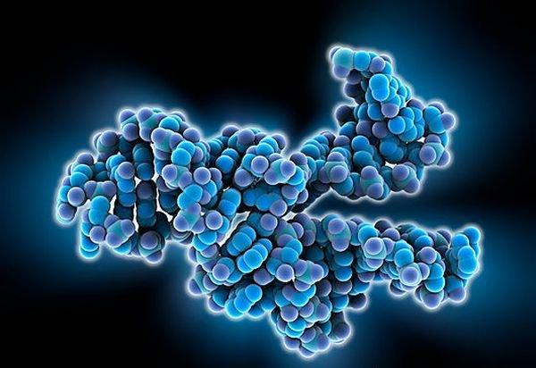 Биологи поведали о«половой» жизни молекул наЗемле