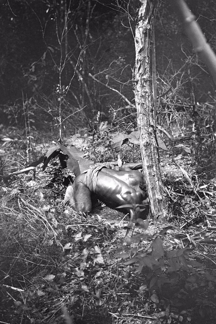 371. Лесной ведд выкапывает ямс