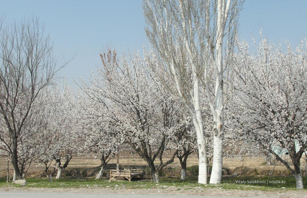 Весна в Узбекистане 2018